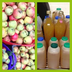 Picked all our apples from the allotment and pressed them to proof ice 25 pints of sweet juice!