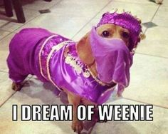 @Melanie Bauer Bauer King Williams  - Dreaming of Weenie... I mean Penny