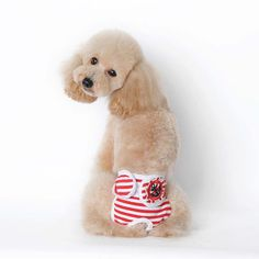 85144d598a92 Pet's Cotton Striped Bitch Physiological Pants Underwear Diapers Pet Dog  Puppy Shorts Clothes Dog Clothes-in Dog Shorts from Home & Garden on  Aliexpress.com ...