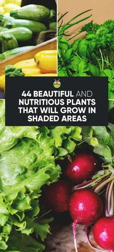 Organic Gardening Ideas 44 Nutritious Vegetables That Will Grow in Shaded Areas in Your Garden - If you'd like to utilize every part of your yard but have a lot of shade, there are some vegetables that grow in shade easily. Here is a comprehensive list. Plants That Like Shade, Shade Plants, Mint Plants, Garden Types, Organic Vegetables, Growing Vegetables, Shade Garden, Garden Plants, Box Garden