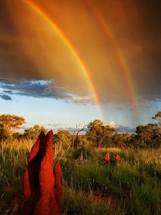 australian rainbow...A double rainbow frames termite mounds in Australia's grasslands. Double arcs happen when light is reflected more than once in an atmospheric water droplet.