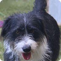 Adopt A Pet :: Sandra Dee - Allentown, PA