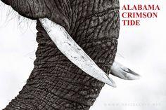 Alabama Crimson Tide ...