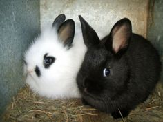 Hoppy Easter! Don't buy real Bunnies unless you are willing to care for them for life!!