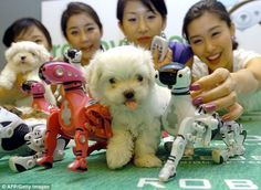 Rise of the robot DOGS: Experts say pets set to be replaced by technology as only the super rich will be able to afford real animals | A Melbourne professor warns the global growth in population will lead to real animals being only for the super-rich. [The Future of Robots: http://futuristicnews.com/category/future-robots/]