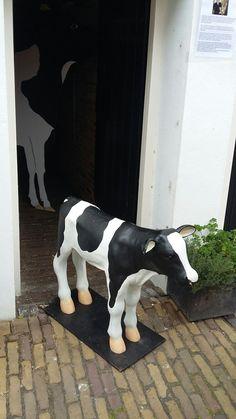 Cow Decor, Cows, Animals, Animales, Animaux, Animal, Animais