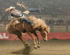 Things to do in Mendocino County this week -- a rodeo, a park, a ...