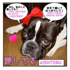 Aishite imasu I love you in japanese @Sammy Walker