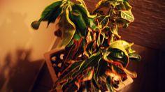 Planta Psicodélica
