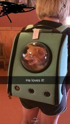Noooo;-; poor kitty :(