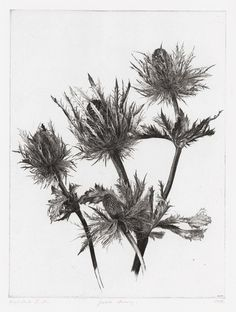 Jakob Demus (Austrian, b.1959)|  Large Eryngium  (1988) |  Diamond drypoint
