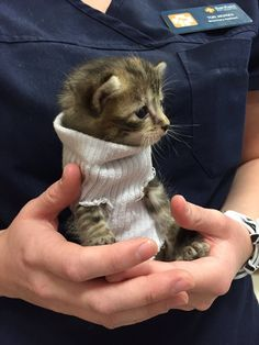 A tiny kitten, who was found in the storm by Hurricane Matthew, now has a new sweater to keep her warm and a forever home that loves her to bits. Courtesy: Sarah twitter@crysomemore When a family went to a PetSmart in Northwest Raleigh, North Carolina to look at shelter kitties, they met a very spe...