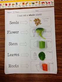 All About Plants First Grade Teacher Firsts: Have a Plant Unit coming up? First Grade Science, Primary Science, First Grade Teachers, Kindergarten Science, Teaching Science, Science Activities, Science Fun, Science Projects, Life Science
