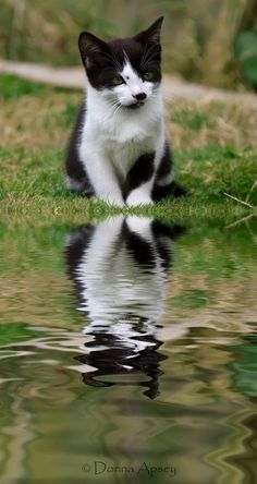 Sweet!  #CATS Feel free to share on Pinterest\\ ღ www.FASHIONUPDATES.NET