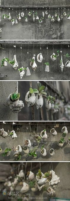 hanging seashell atrium?? x3