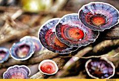 грибы,Природа,красивые фото природы: моря, озера, леса,краски
