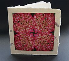 Unique greetings card design for birthdays or Father's day. Card without a specific written message. This beautiful photograph of a hydrangea head by photographer Jonathan Leach is mounted on handmade Indian paper and comes complete with a handmade paper envelope. All profits from this card sale goes to support the charity LEPRA Health in Action.  Price £3.50 P&P included.