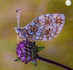 Die 777 Besten Bilder Auf Blumen Schmetterlinge In 2019