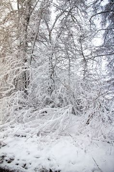 ⛄Traumhafte Winterlandschaft: So schön ist das Sauerland im Winter (Teil 2) - Hennen Arts #sauerland #fotografbochum #schnee #schneeflocken #bäume