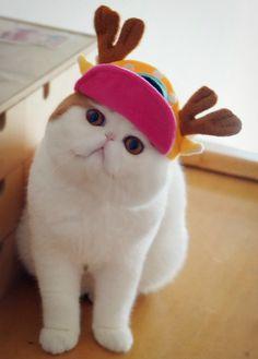 #cat #cap #reindeer