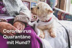 Coronavirus: Wer kümmert sich in der Quarantäne um meinen Hund? Dogs, Animals, Corona, Cats, Pet Dogs, Health, Animales, Animaux, Doggies