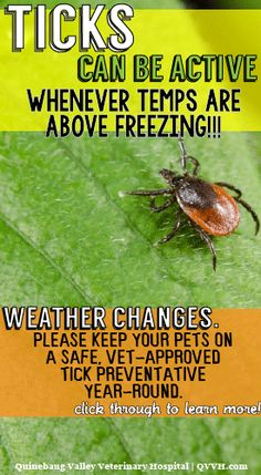 *PLEASE RE-PIN TO REMIND PET OWNERS!* Ticks can be active in some pretty cold temps. It's a warm day in CT today; a reminder that weather changes! Always use a veterinarian approved product on your pet! www.qvvh.com #petsafety