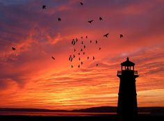 Free Image on Pixabay - Sunset, Ocean, Lighthouse, Birds Free Pictures, Free Images, Blessed Are We, Sea Photo, Names Of Jesus, Vacation Trips, Beautiful Landscapes, Gods Love, Background Images