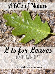 ABCs of Nature: L is for Leaves | Stir The Wonder #kbn #nature #preschool