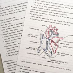 """aspiringstudyblr: """"05.08.16 // Here's a glimpse of my notes on the blood system…"""