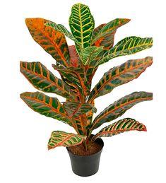 Passer godt for allergikere Plants, Flora, Plant