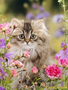 Nice portrait of a Persian Cat posing with flowers!