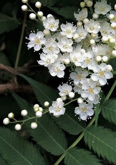 photo: tiny white flowers against a deep green background ...