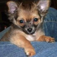 Natural home remedies for ear infections in dogs.
