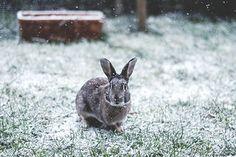Roger Rabbit - Snow | Flickr - Photo Sharing!