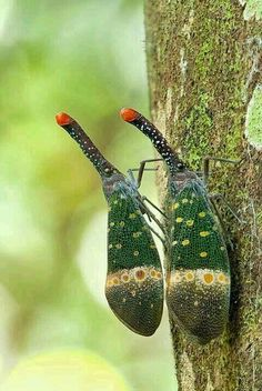Credit: Insect World