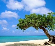 Aruba + Crucero por el caribe!  #4tourists
