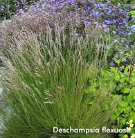 grounded design by Thomas Rainer: Native Plants for the Cottage Garden