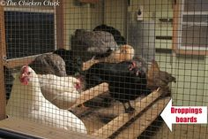 Remove the Poop: Promptly remove nightly droppings from the chicken coop. A droppings board is the best solution to this stinky fly attractant and it takes less than a minute daily to scrape it down add the manure to the compost pile. Chicken Pen, Chicken Chick, Fresh Chicken, Chicken Eggs, Best Egg Laying Chickens, Keeping Chickens, Raising Chickens, Chicken Coop Plans, Diy Chicken Coop