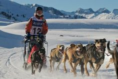 Mushing in the Lleida Pyrenees (Spain). www.lleidatur.com     Photography: @JordiOllerM