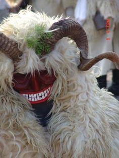 Hungary, Goats, Animals, Animaux, Animal, Animales, Goat, Animais