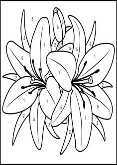Printable Lilies Coloring Pages for Kids