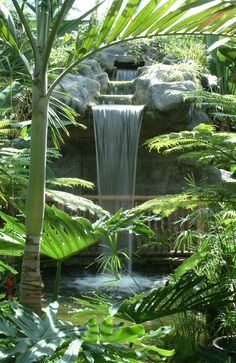 Be sure to check out the Cambridge Butterfly Conservatory… Stuff To Do, Things To Do, Conservatory, Cambridge, Ontario, This Is Us, Waterfall, Butterfly, Check