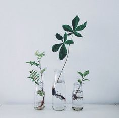 I first collected some saplings in spring, expecting them to live a few weeks like cut flowers. Instead, they kept on growing, and I've had mini trees on my windowsill ever since – with…