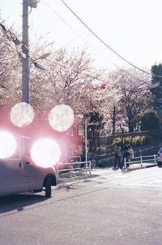 ようやく厳しい冬があけて、春がやってきましたね。今回は、2000年よりさまざまな姿の桜を撮ってきた大森克己の作品シリーズ「すべては初めて起こる」をご紹介。2011年の震災直後に撮られた福島、千葉、東京の桜の写真の中に写り込んでいるピンクの光にこめられた意味とは?