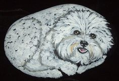 Bichon+Frise+Dog+Hand+Painted+Rock+Art+by+daniellesoriginals,+$19.00