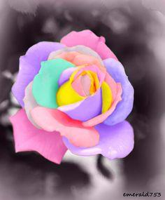 Pastel Rose by theresahelmer.deviantart.com on @deviantART