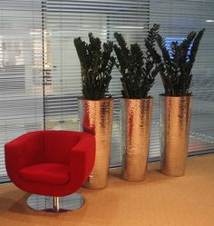 Zamioculcas in hammered 'bronze' containers