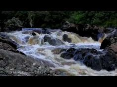 8 Hours Relaxing Sounds of Nature-Bird Sounds-Water Sounds-Waterfall-Birds singing - YouTube