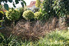 Trzmielina - Euonymus - strona 22 - Forum ogrodnicze - Ogrodowisko