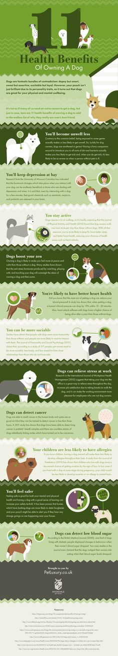 The Proven Health Benefits Of Having A Dog